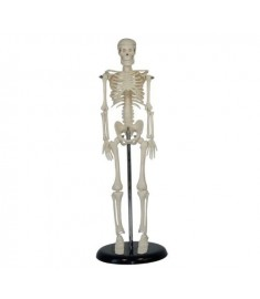 "MINI SKELETON 16.5""(42cm) TALL WITH STAND"