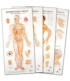 Acupuncture Wall Chart Posters