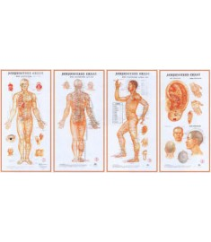 Body Acup. Point Wall  Chart Set