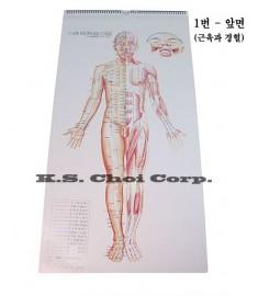 Body Acup. Point CALENDAR Chart Set