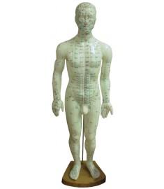 "20"" Human Model"