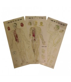 Body Acupuncture Wall Chart Set