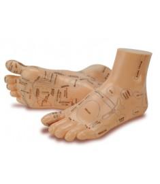 Foot Reflex Model Set