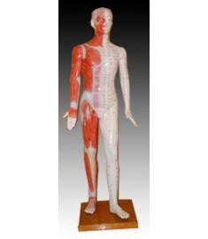 """70"""" Deluxe Human Model"""