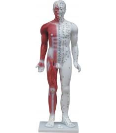 """33"""" Deluxe Human Model"""