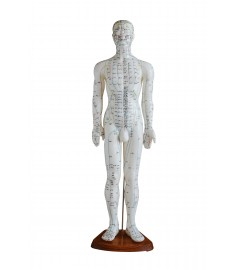 "24"" Human Model"